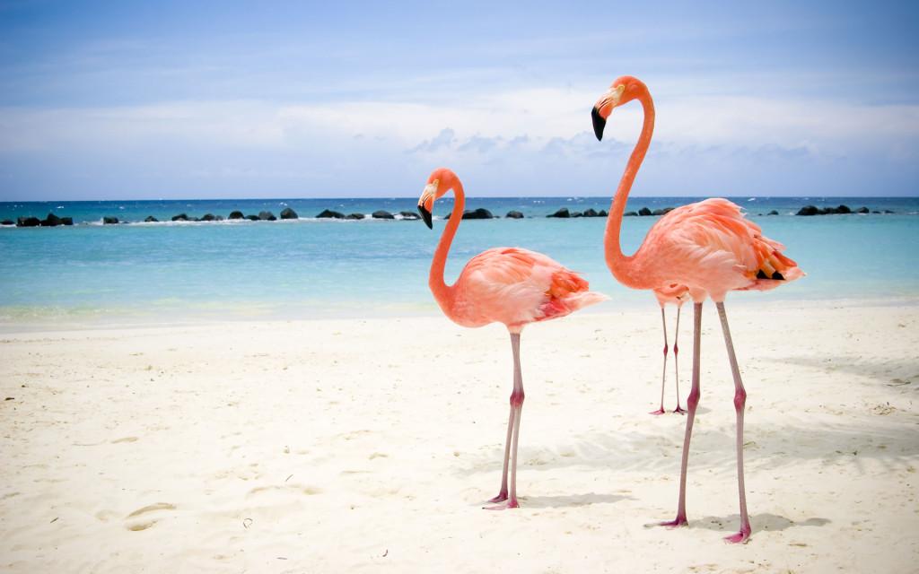 Фламингго на острове Кайо Левантадо