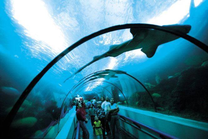 Национальный аквариум Санта-Доминго