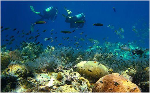 Остров Чанг   Туристическое агентство Мультипасс   (499) 653-6300
