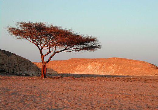 Сафари | Туры в Марса Алам | Турагентство «Мультипасс» | 8 (499) 653-6300