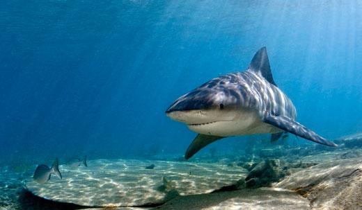 Пещера спящих акул   Исла Мухерес   Турагентство «Мультипасс»   8 (499) 653-6300