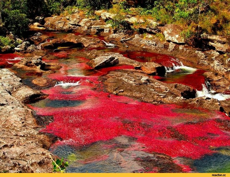 Кристальная река | Колумбия | Турагентство Мультипасс | 8 (499) 653-6300
