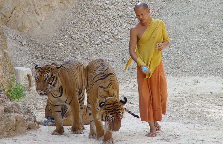 Тигриный монастырь   Таиланд   Турагентство Мультипасс   8 (499) 653-6300